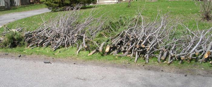 Branches APRÈS