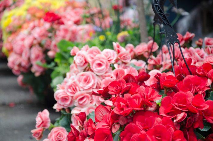 marché des jardiniers